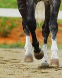 Piernas del caballo Fotografía de archivo