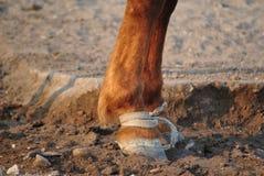 Piernas del caballo Imágenes de archivo libres de regalías