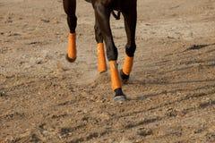 Piernas del caballo corriente Imagenes de archivo