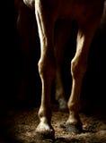 Piernas del caballo en la oscuridad Fotografía de archivo libre de regalías