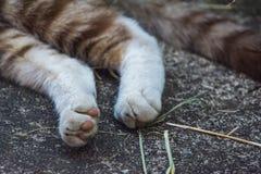Piernas del primer y cola del gato soñoliento nacional imagenes de archivo