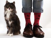Piernas del ` s de los hombres en calcetines divertidos y gatito hermoso fotografía de archivo