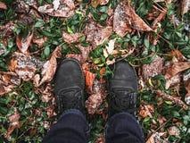 Piernas en las botas, hojas caidas en el bosque foto de archivo
