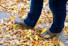 Piernas en las hojas caidas amarillo del otoño Imágenes de archivo libres de regalías