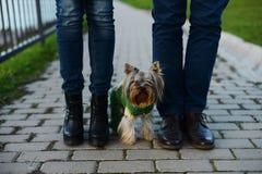 Piernas en pares del amor y su pequeño perro Imágenes de archivo libres de regalías