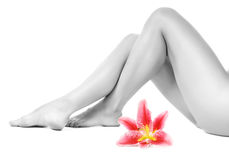 Piernas femeninas con el lirio rosado Imagen de archivo