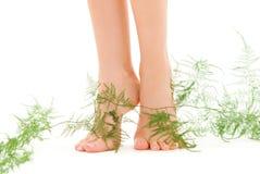 Piernas femeninas con la planta verde Foto de archivo libre de regalías