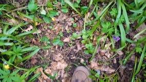 Piernas que caminan en el sendero en el bosque de la primavera
