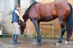 Piernas rojas del ` s del caballo que son lavadas con la manguera en ducha fresca Fotos de archivo libres de regalías