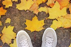 Piernas y hojas en la tierra fotos de archivo
