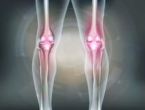 Piernas y junta de rodilla humanas Imagen de archivo libre de regalías