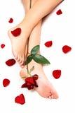 Piernas y Rose Fotografía de archivo