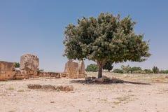 Pierre antique dans le temple de la Chypre Images stock