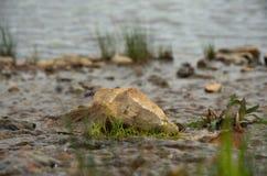 Pierre au milieu de The Creek, envahi avec l'herbe Photos stock
