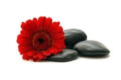 Pierre avec des fleurs Photographie stock