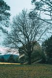 Pierre avec une grande pierre et un arbre sans feuilles Photos libres de droits