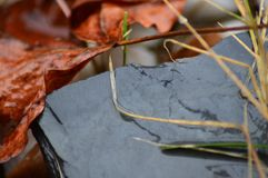 Pierre d'ardoise entourée par des feuilles image stock