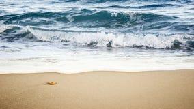 Pierre de mer Photos libres de droits