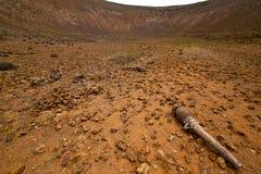 Pierre en bois de roche volcanique de buisson d'usine   colline et été photos stock