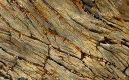 Pierre en bois pétrifié Image libre de droits