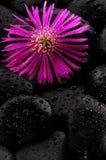 Pierre et fleur Image stock