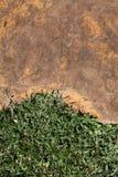 Pierre et herbe Image libre de droits