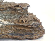 Pierre et la carcasse ou les fossiles Images stock