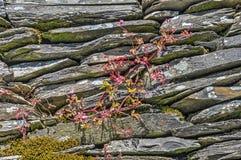 Pierre, mousse et mauvaises herbes empilées Photographie stock libre de droits