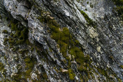 Pierre naturelle rugueuse avec la texture verte et blanche de mousse Images stock