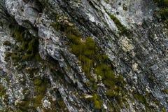 Pierre naturelle rugueuse avec la texture verte et blanche de mousse Images libres de droits
