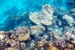 Pierre sous-marine et vie marine de récif dans l'océan Photographie stock libre de droits