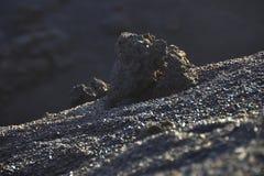 Pierre volcanique Images libres de droits