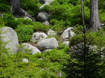 Pierres au milieu de la forêt Image stock