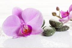 Pierres d'orchidée et de station thermale sur un fond blanc Belles fleurs roses sur une branche Photo stock