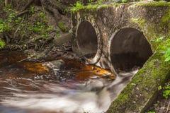 Pierres de cascade de rivière de forêt Image stock