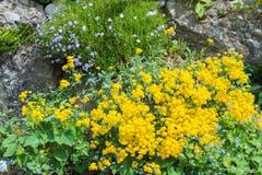Pierres de jardin avec des fleurs Photo stock