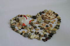 Pierres de mer présentées avec un coeur sur le blanc Photo stock