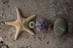 Pierres de plage d'étoiles de mer et composition en coquillage photo libre de droits