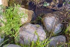 Pierres de progression dans l'eau d'un étang photographie stock libre de droits