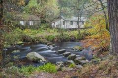 Pierres de progression dans une scène de région boisée d'automne Images stock
