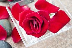 Pierres de station thermale et pétales roses Photographie stock