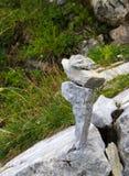 Pierres empilées équilibrant dans les montagnes images stock