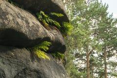 Pierres empilant au parc chez les Monts Oural macro image libre de droits
