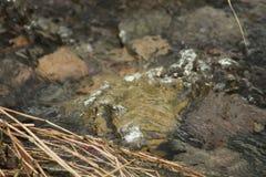 Pierres en rivière images libres de droits