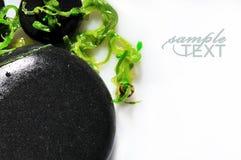 Pierres et algues de station thermale d'isolement sur le blanc Images stock