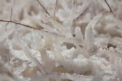Pierres et cristaux de sel de mer morte à la mer morte Macro photo l'israel photos libres de droits