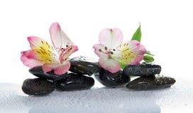 Pierres et la fleur d'un alstroemeria Photographie stock