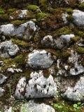 pierres et mousse Photos stock