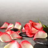 Pierres et pétales de rose de station thermale au-dessus de fond gris Images stock