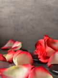 Pierres et pétales de rose de station thermale au-dessus de fond gris Photographie stock